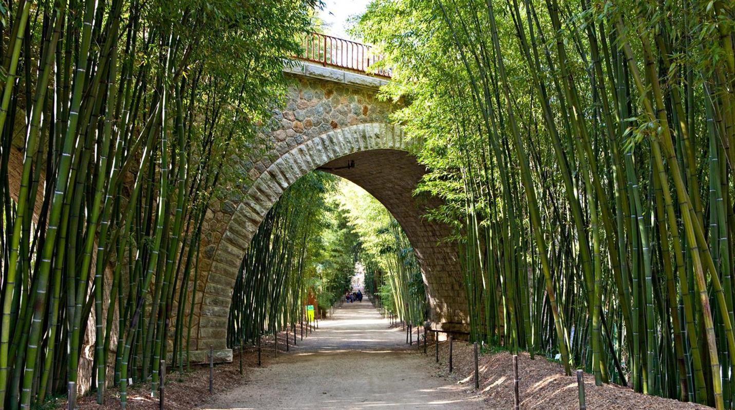 La bambouseraie d 39 anduze que faire et que voir en c vennes appart hotel les 4 sources - La bambouseraie a anduze ...